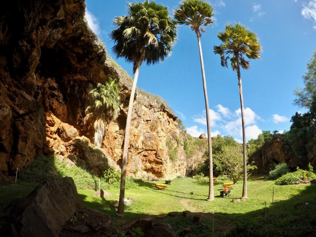 palm trees growing in Makauwahi Cave