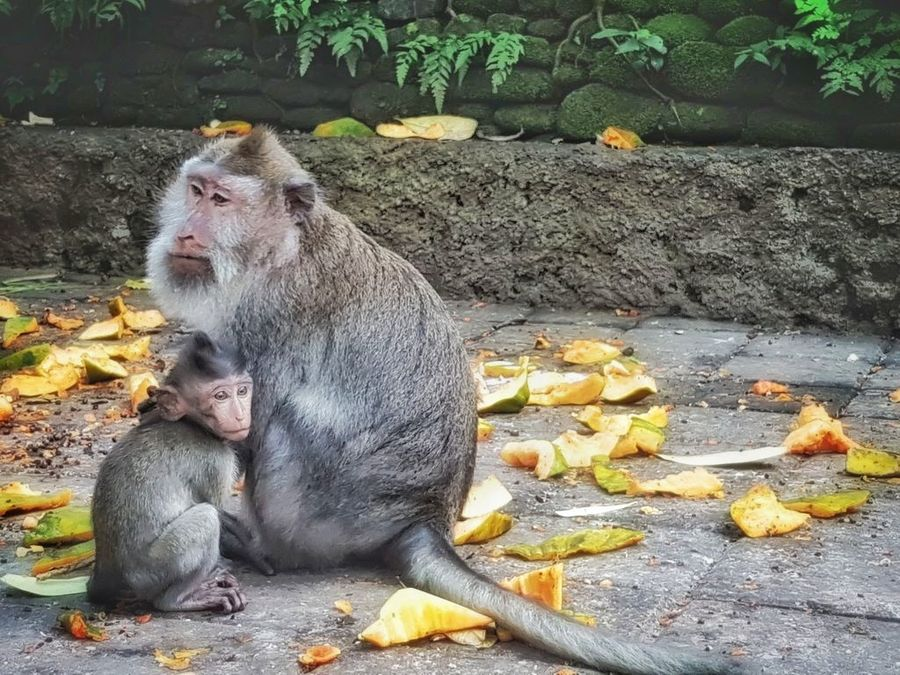 Bali With Kids: Monkey Forest Ubud