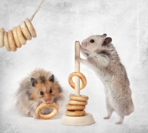 Still-Life-with-Hamsters-7-600x538