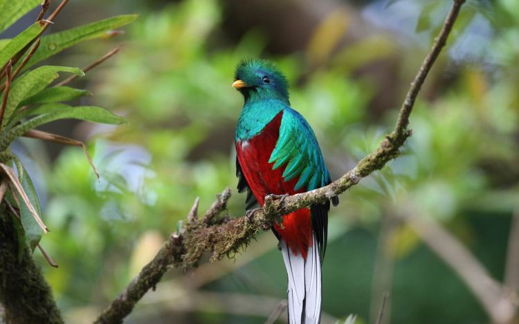 quetzal-bird-on-branch