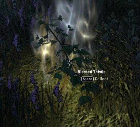 Exploring the Elder Scrolls Online - Blessed Thistle