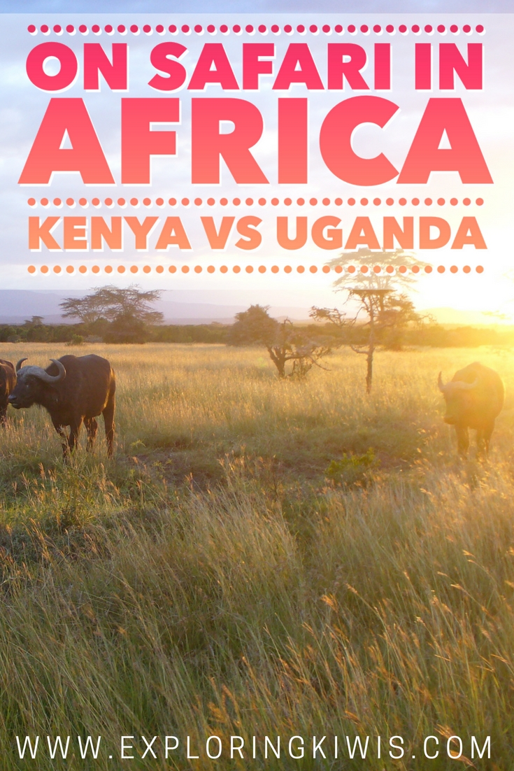 Safaris can be expensive.  Having been on safari in Kenya and Uganda, we break down which African country offers the best value.
