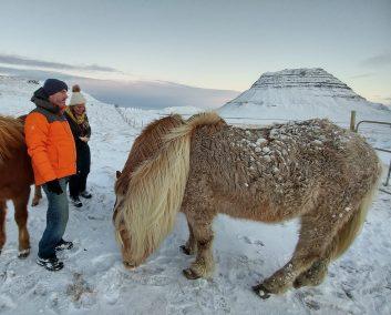Snæfellsnes Peninsula Moonwalker Tours Iceland feeding Icelandic horses