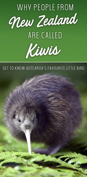 Around the world people mistakenly think they're eating kiwis. Kiwis are actually New Zealand's national bird - a flightless, unique creature and the very reason New Zealanders are referred to as Kiwis.