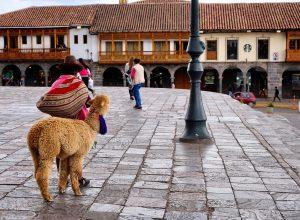 Cusco Peru llama
