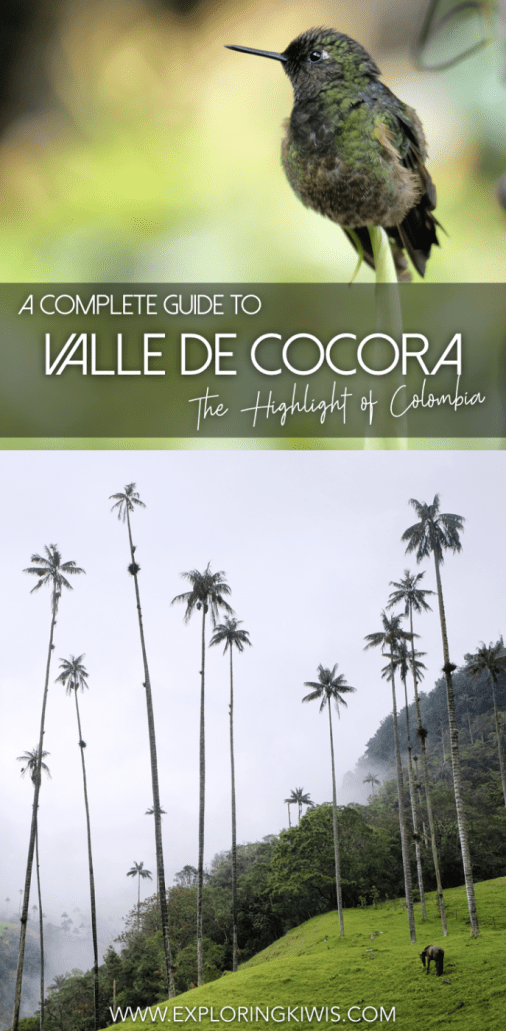 A complete guide to the Cocora Valley, near Salento, Colombia. Check out the world's tallest palm trees, hike through beautiful cloud forest and see one of South America's favourite birds, the hummingbird! Full transport information, costings and instructions are included.