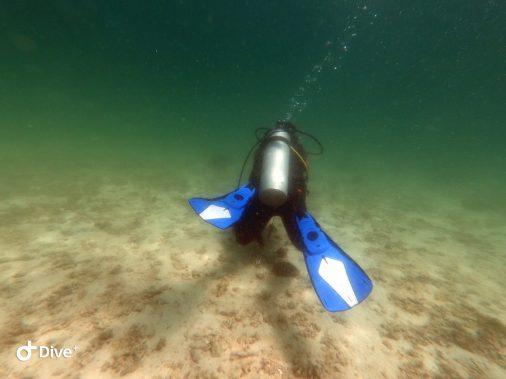 Diving in Fujairah - Al Boom