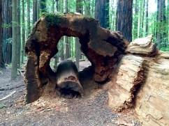 Trunk Hollow