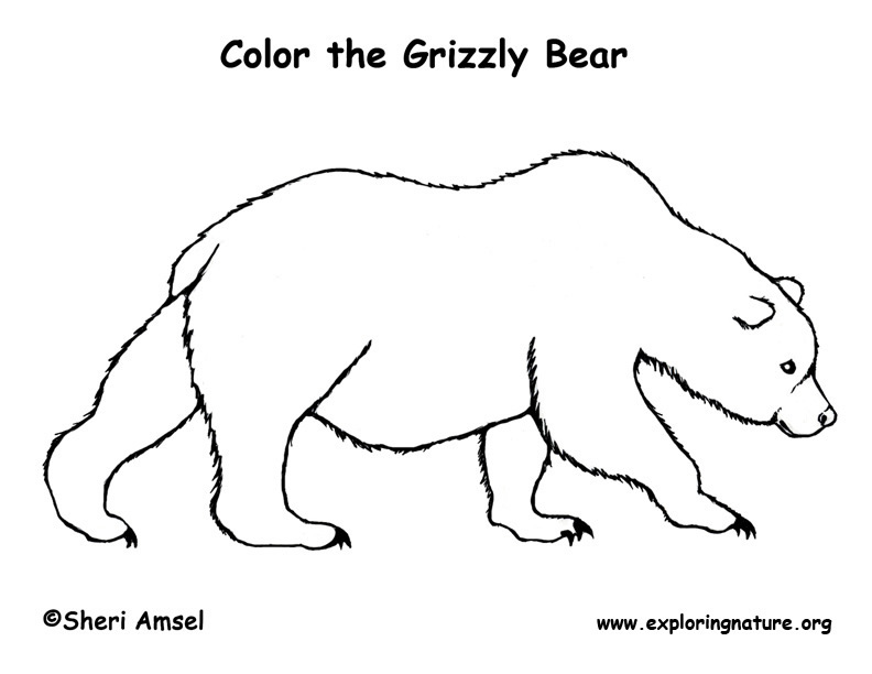 Bear (Grizzly) Coloring Page