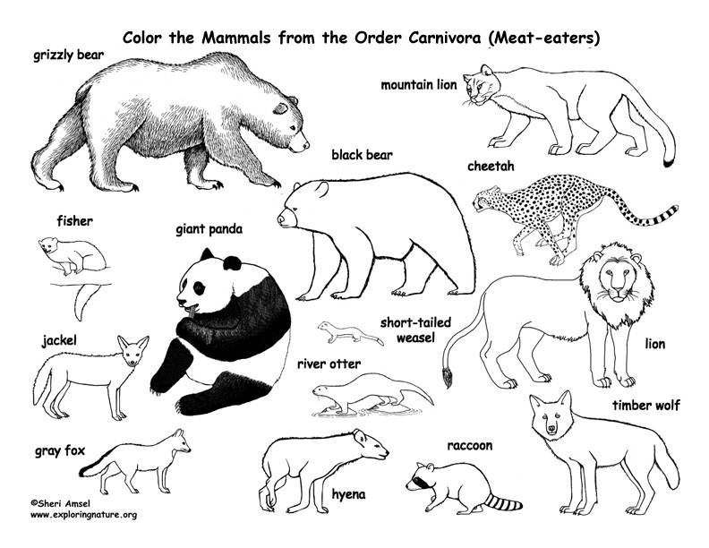 Carnivores Coloring Pages