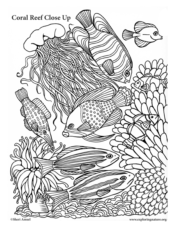 Coral Reef Coloring Page : coral, coloring, Coral, Close, Coloring