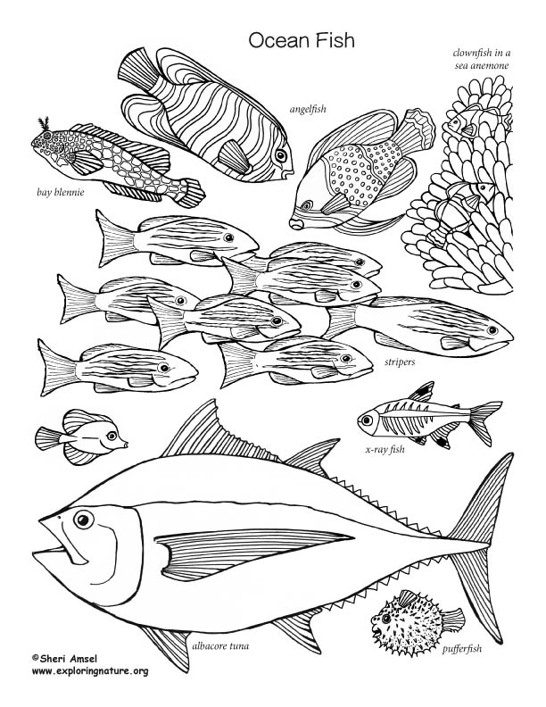 Fish Coloring Pages Pdf : coloring, pages, Ocean, Coloring