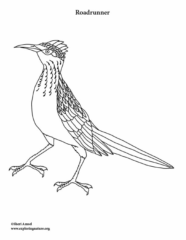 Road Runner Coloring Pages : runner, coloring, pages, Roadrunner, Coloring