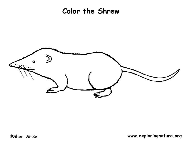 Shrew (Long-tailed) Coloring Page