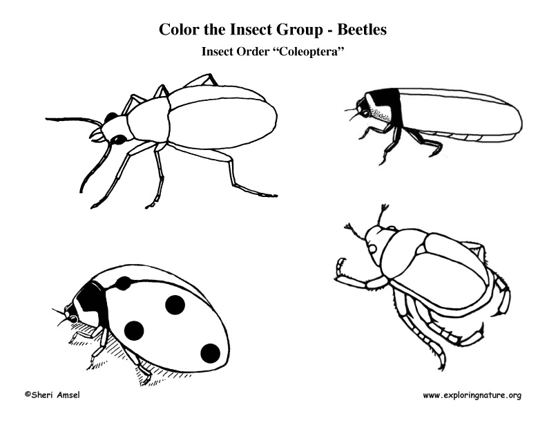 Praying Mantis Coloring Books Coloring Pages