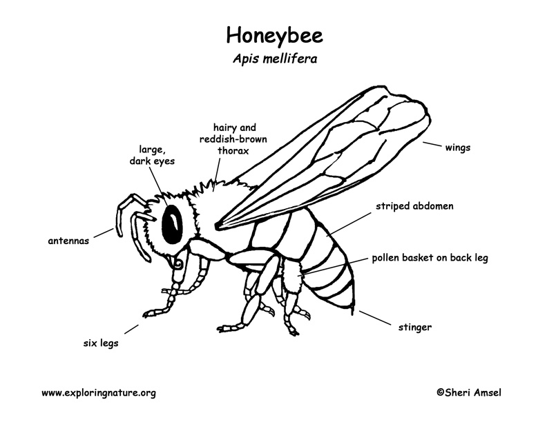 Honeybee Labeling Page