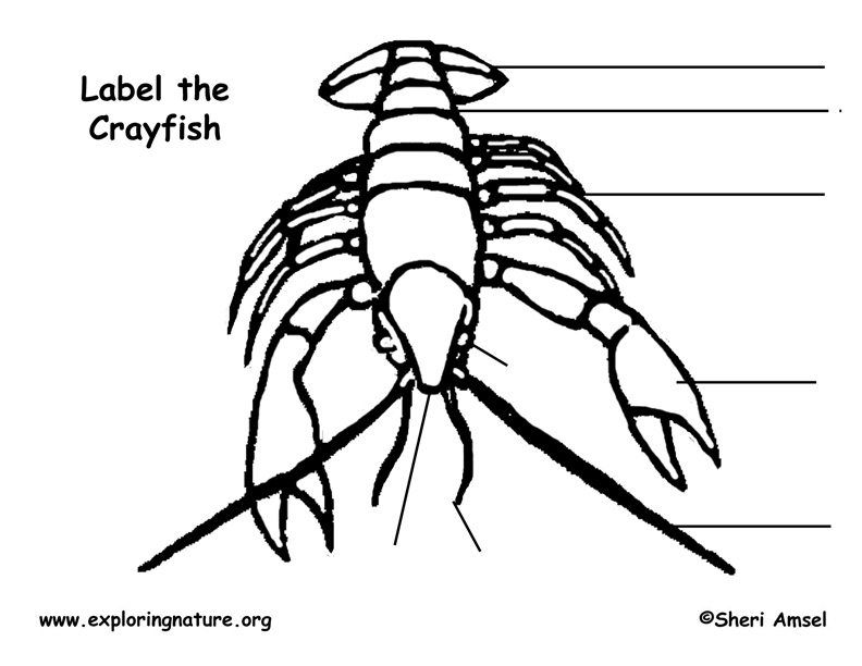 Crayfish Labeling Page