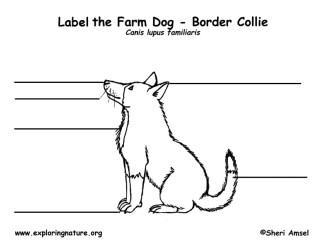 dog labeling exploringnature