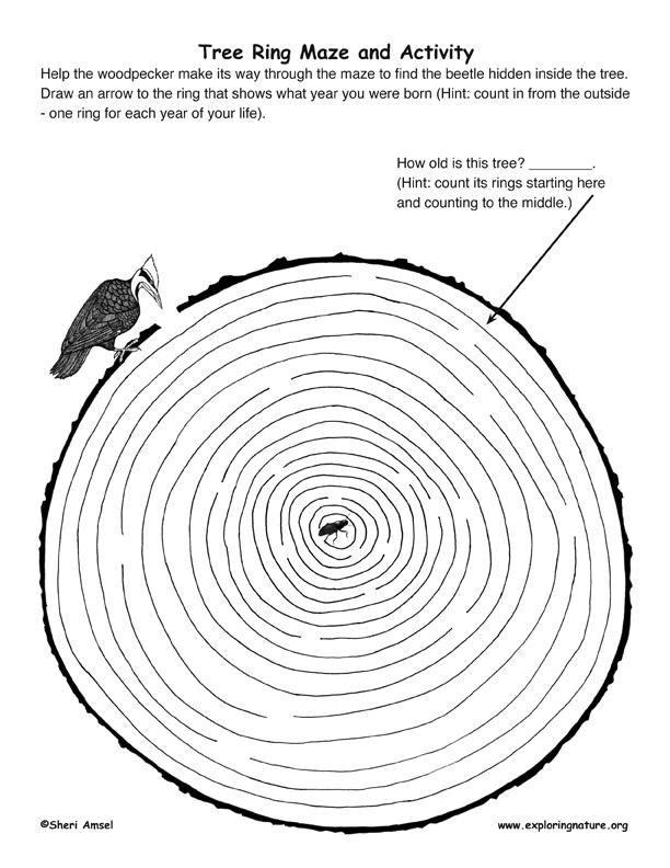 Tree Ring Maze