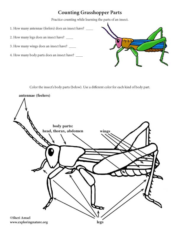 Grasshopper Labeled : grasshopper, labeled, Label, Parts, Grasshopper, Labels, Ideas