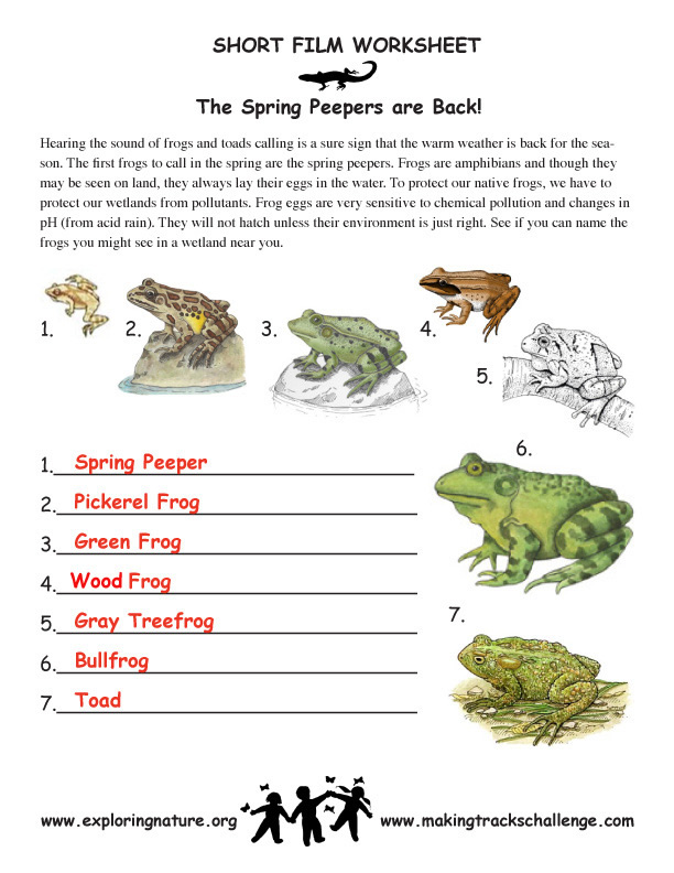 Spring Peepers And Other Cool Amphibians Exploring