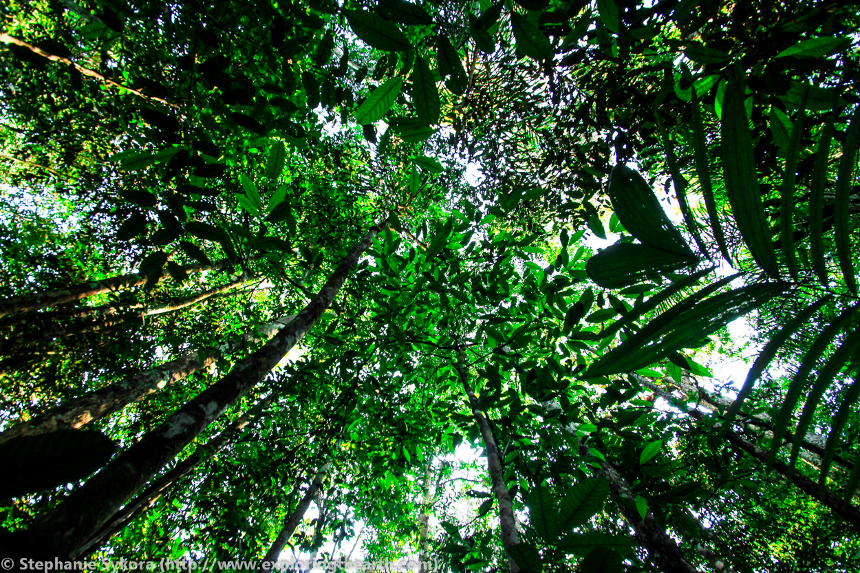 Amazon Rainforest Canopy Brazil & Where the Amazon River comes from and rain forest trees! [Brazil ...