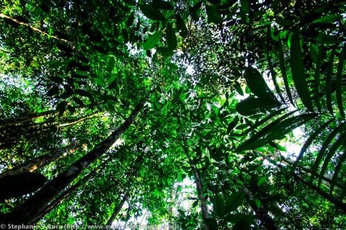 Amazon Rainforest Canopy Brazil forest jungle adventure travel jungle South America