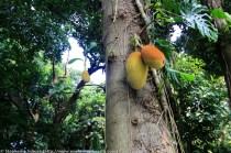 Brazilian Fruit in Rio de Janeiro Brazil vegetation travel adventure South America