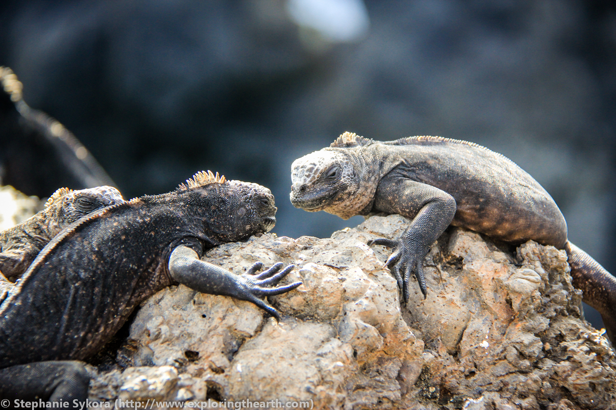 The Galapagos Islands - The volcanic creation of these ...