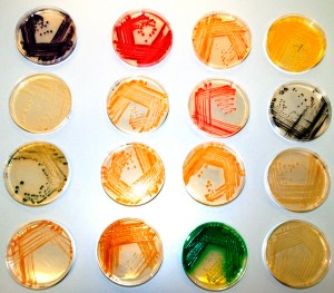 The living palette of pigmented bacteria