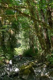 Hiking near Henderson Lake, Alberni Valley