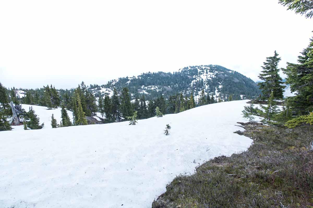 Mount Hal's summit