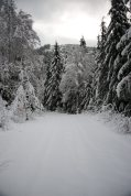 snowshoeing, vancouver island, explorington, matthew lettington, hiking, mountaineering, Mt Spencer, Alberni Valley