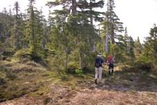 Bonanza Range, Whiltilla, Whiltilla Mountain, hiking on Vancouver Island