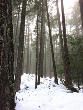 Big Den, Strathcona Park, Hiking, Mountaineering on Vancouver Island