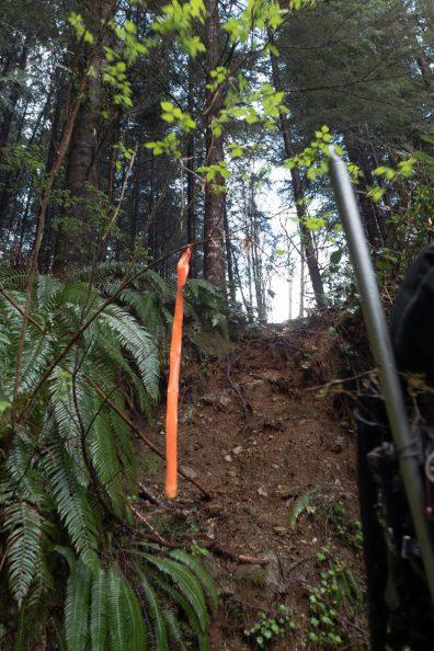 hiking in the Vancouver Island's Mackenzie Range