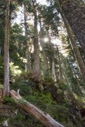 sun blazing through the trees on our hike to Mount Judson in Strathcona Park