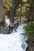 patchy snow within the trees on our Mount Judson hike in Strathcona Park