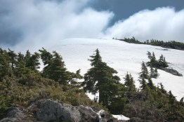 Looking up a snow covered slop toward the summit of Mount Judson