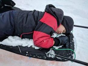 child sleeping on a pulk sled