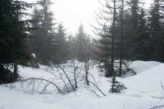 skitouring, Mount Brenton on Vancouver Island