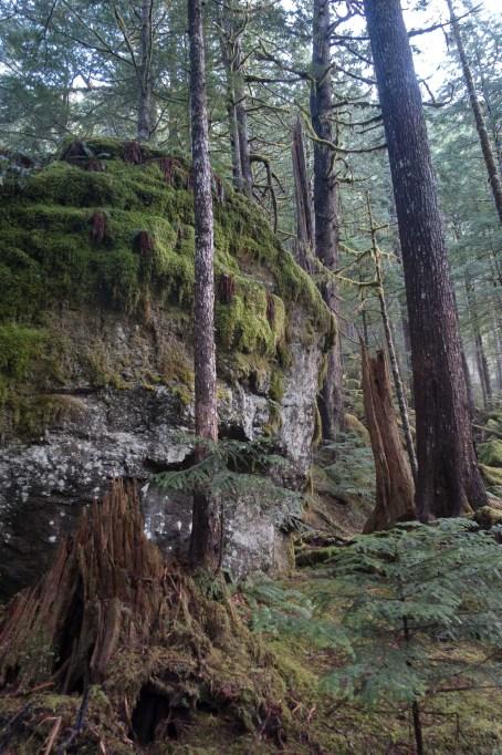 open forest en route to Canoe Peak
