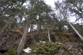 Mount Flannigan; Strathcona Park Vancouver Island