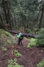 hiking to Mount Abraham on Vancouver Island