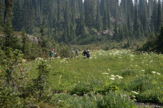 Mount Phillips, Arnica Lake, Mount PHillips