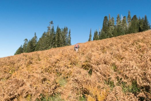 hiking to Green Mountain