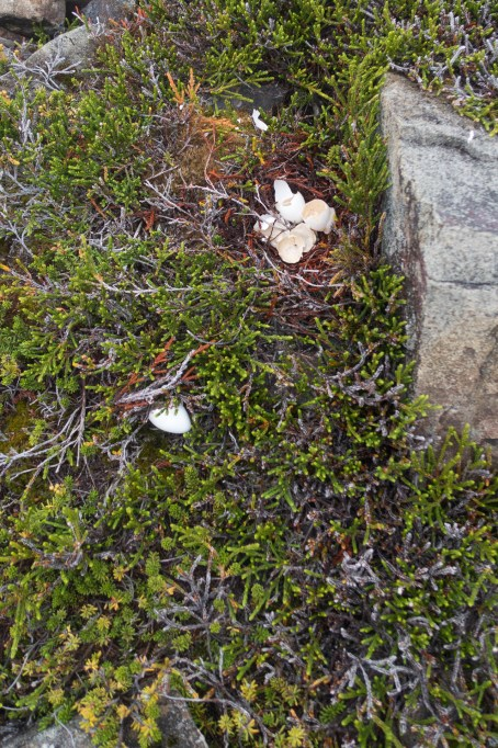 Ptarmigan nest! A highlight of the trip!