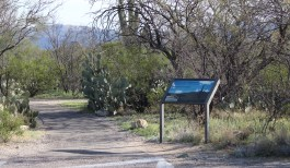 Desert Ecology Trail