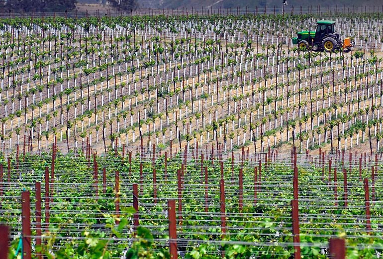 Planting Pinot Noir Vineyards