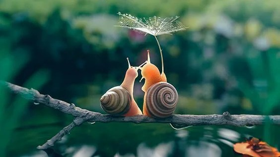 Cute Couple Together Wallpaper The Slow Movement The Slower The Better Exploring Your Mind